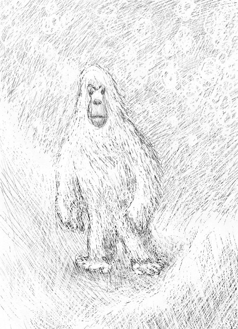 雪男の毛!?