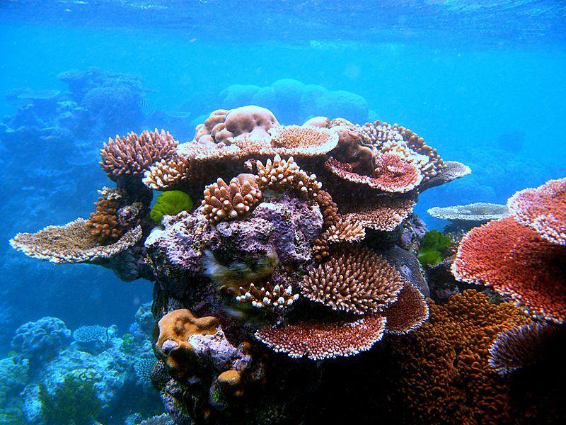 石西礁湖~半分以上のサンゴが死んじゃった!?