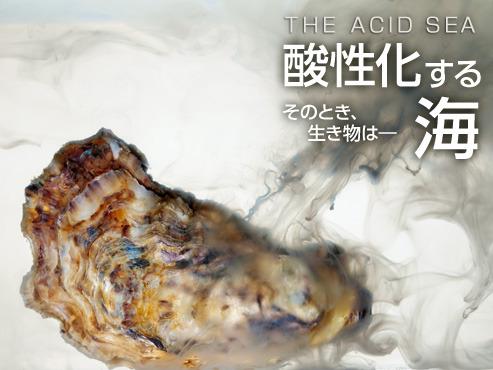 海の酸性化「前例ないスピード」 !?