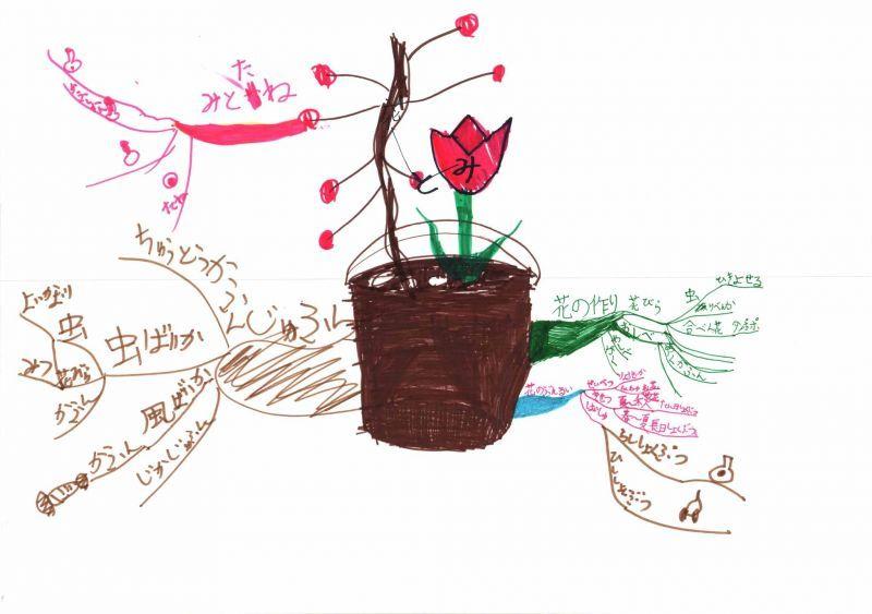 みんなのマインドマップ~花と実