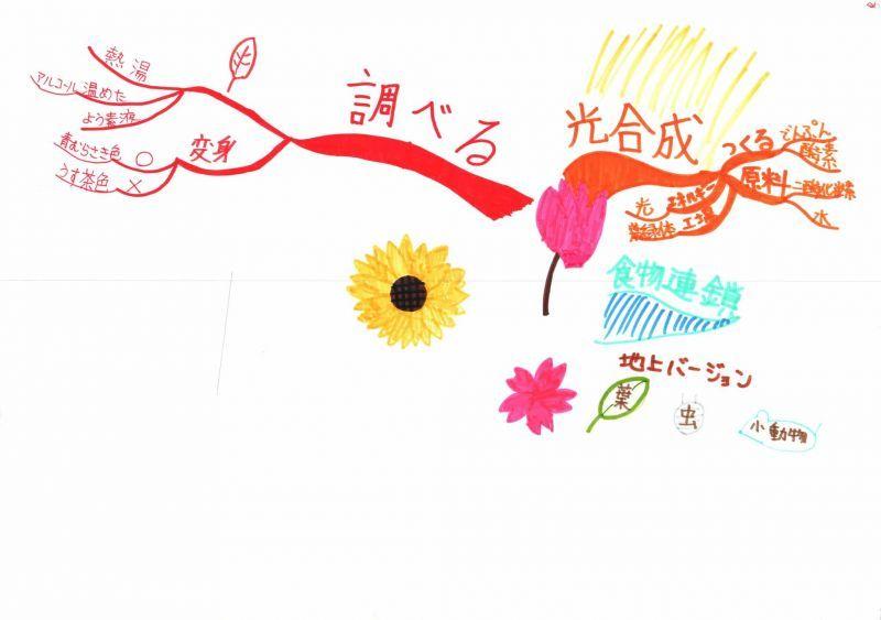 みんなのマインドマップ~植物のはたらき(小学4・5年生)