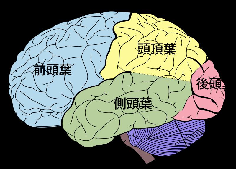 脳地図プロジェクト!?