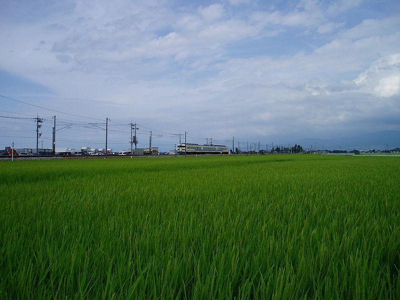 がんばれ日本の農業~その2