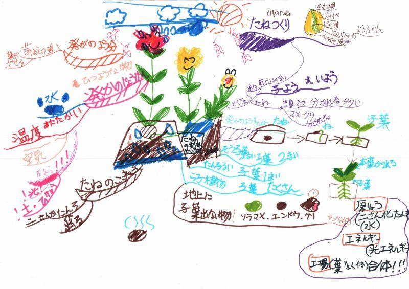 みんなのマインドマップ~種の発芽と成長