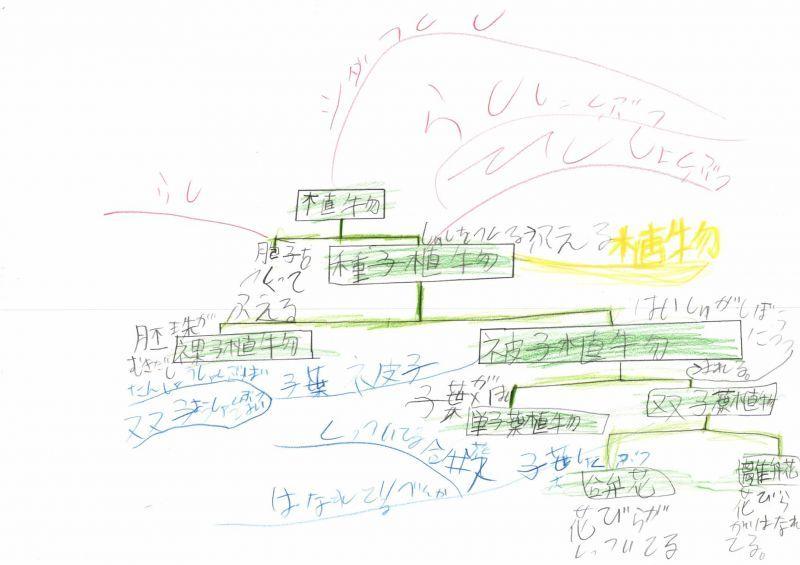 みんなのマインドマップ~種子植物の分類(小学4年生)