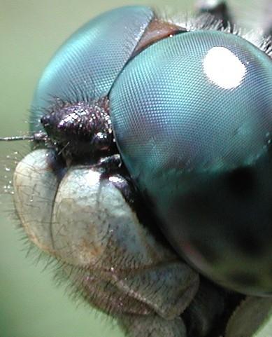 昆虫カメラ!?