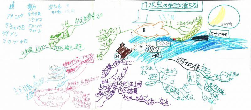 みんなのマインドマップ~水中の生物