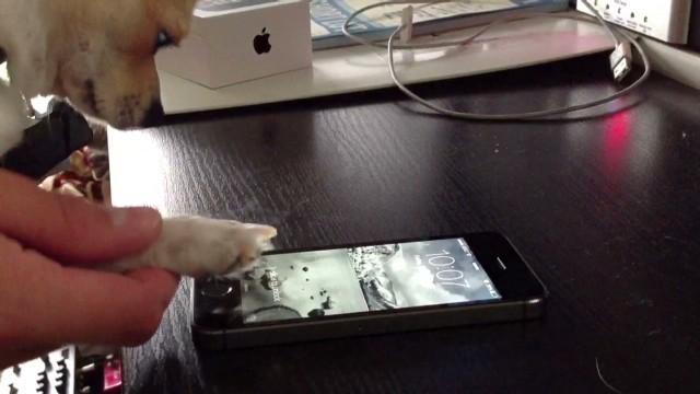 犬の足でiPhone!?