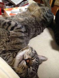 年々数が減少~日本のネコは何種類?