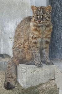 東山動植物園の春~どんな動物たちががんばっているの?