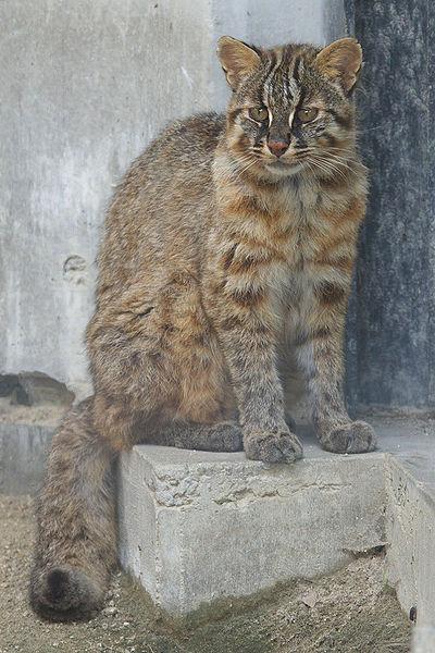 日本のネコたち!?~その2