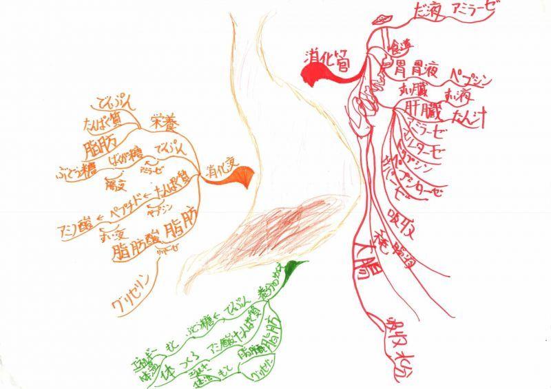 みんなのマインドマップ~肺と呼吸