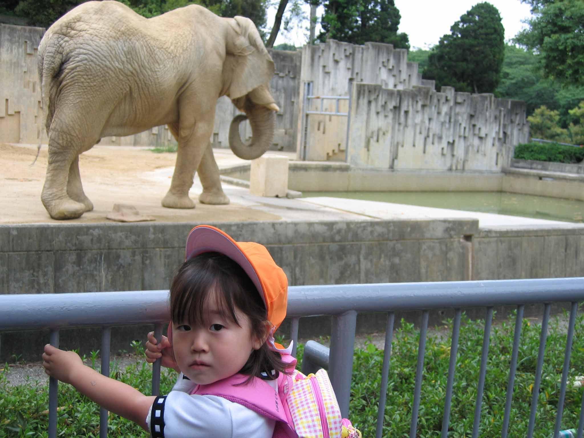 東山動物園で動物総選挙~栄えある第1位は!?