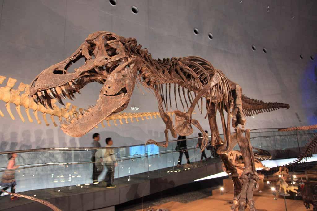 ティラノサウルスのひみつ~なんでそんなに大きくなったの?