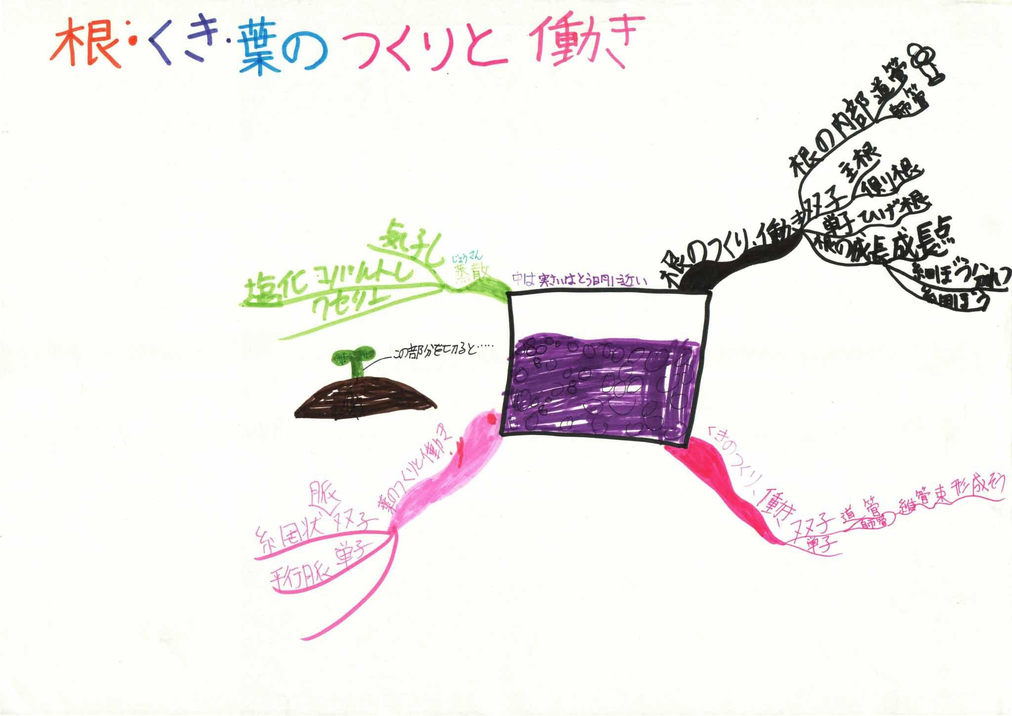 みんなのマインドマップ~根・くき・葉のつくりと働き(小学5・6年生)