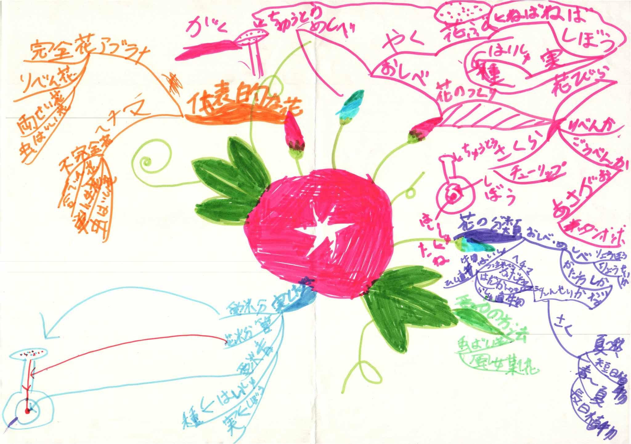 みんなのマインドマップ~花と実(小学4・6年生)