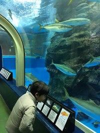 水族館大国日本~一番歴史のある水族館は? 2017/08/31 06:00:00