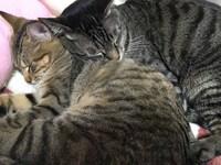 寒い日には、猫バンバン~猫バンバンって何?