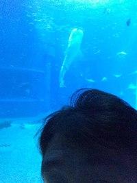 哺乳類と魚類~クジラはどっち?