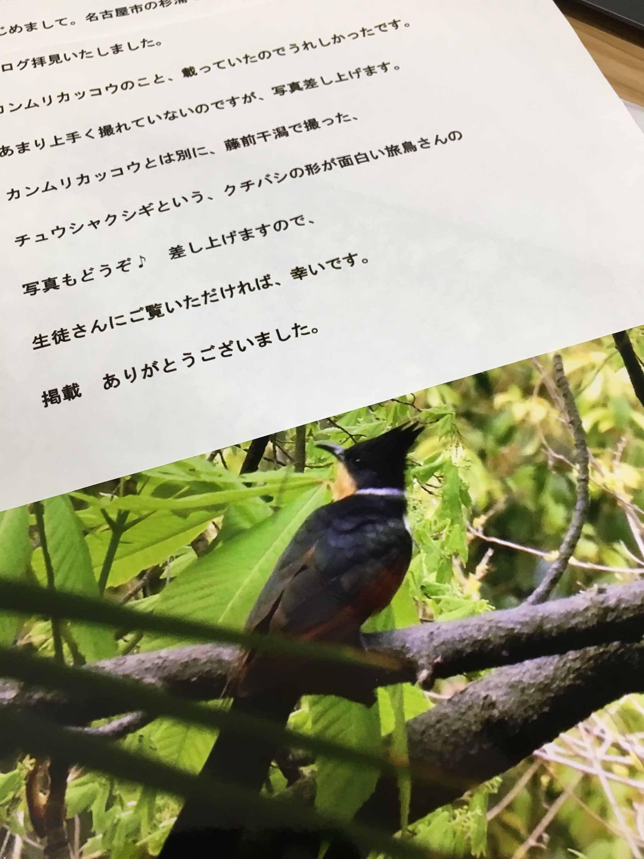 先週の教室より~カンムリカッコウの写真を頂戴しました(^^)/