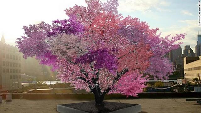 ちょっと変わったすごい木~いったいどうやって生まれたの?