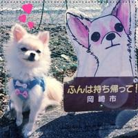 RUPOのおさんぽ風景☆ 2017/01/27 19:00:50