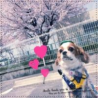 ぴっかぴっかの~1年生☆ 2017/04/18 19:51:44