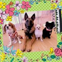 7月15日、16日でカナルホームさんの「愛犬家住宅フェア」イベントに行ってきました☆ 2017/07/18 16:21:28