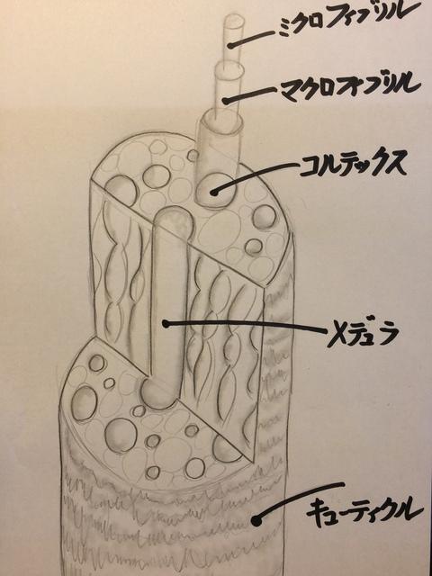 サローネアルティエーレSaloneArtiere毛髪構造図
