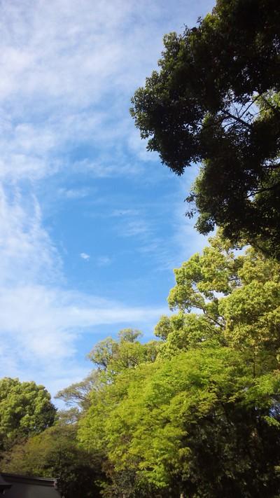 空が青くて、緑が綺麗だから、生協に寄るのを忘れてしまった