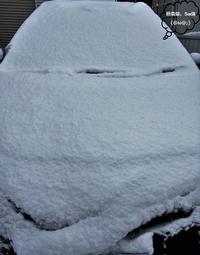 岡崎市でも積雪‼