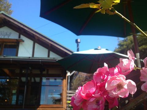 ちょっぴり足を延ばして…身も心も癒される森の中のケーキ屋さん ラ・プロヴァンス in 岐阜県