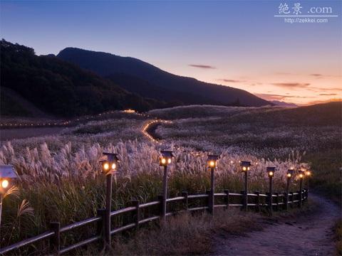 秋 足を延ばして奈良県曾爾高原のススキはいかが?