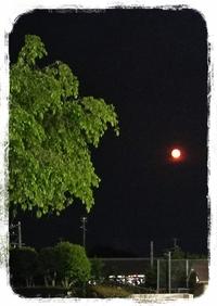 赤い月でしたね((((;゜Д゜)))地震も怖いし。