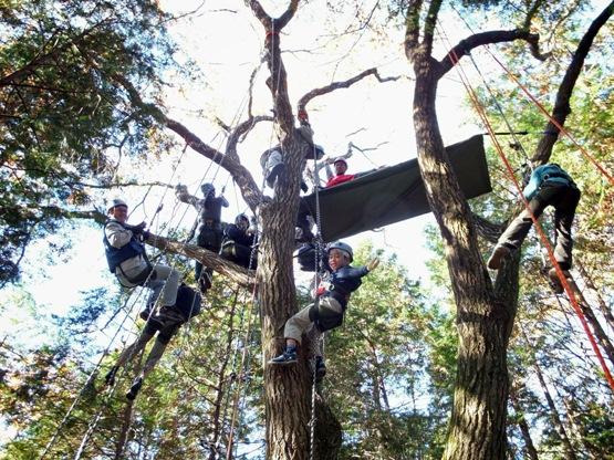"""空から""""森""""を見てみよう!「ツリークライミング体験」参加者募集中"""