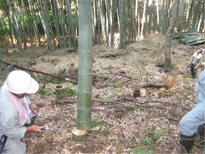 「竹林整備と流しそうめん」プログラムを行いました!