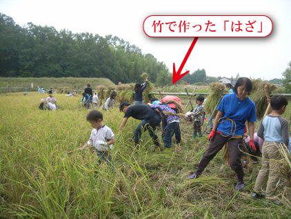 「稲刈り体験」プログラムを実施しました!