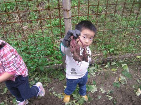 里山のイモ作り体験「イモ掘り」を実施しました!