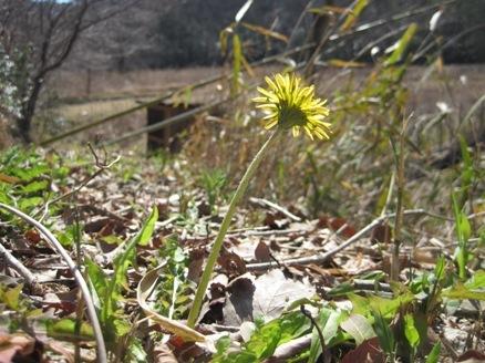 「春の花を見にいこう!」プログラムを行いました!