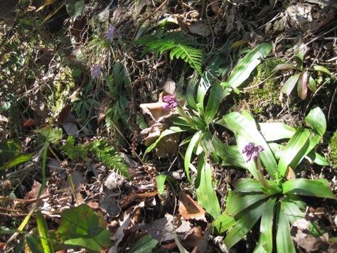 記念植樹した「エドヒガン」(桜)が咲き始めました!