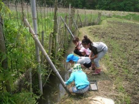 昔ながらの稲作体験「田起こし・カエルを探そう」を開催しました!