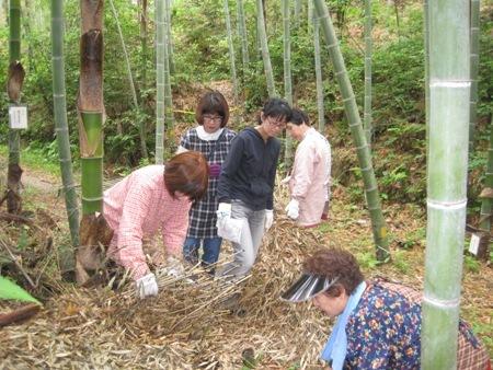 体験の森で「竹ぼうき」を手作りしてみませんか!