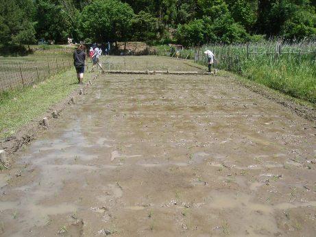 昔ながらの稲作体験プログラム「田植え」を実施しました!
