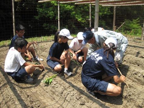 秋の収穫が待ち遠しい!里山の芋作り体験を実施しました!