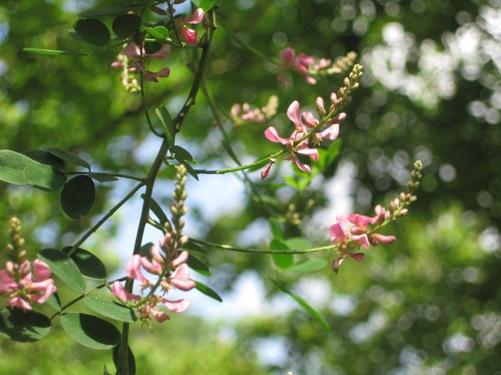体験の森の管理棟周辺で見られる初夏の花々