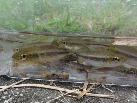 ホタルの川は生き物がいっぱい!