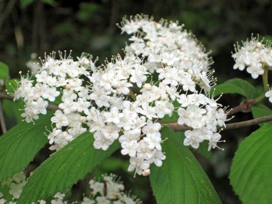 森の自然観察会「花と昆虫の関係」~その1
