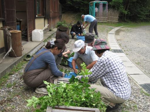 自然の色はどんな色?「春の草木染め体験プログラム」開催レポート