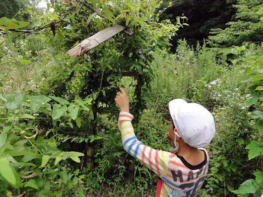 環境教室で「炭作り体験」inおかざき自然体験の森