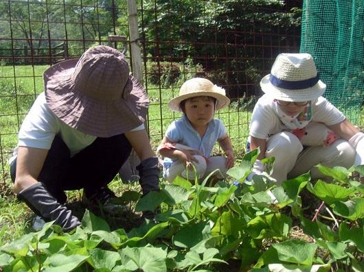 暑さにも負けず!「芋の手入れ&川遊び」を開催しました!